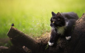 Picture cat, summer, cat, look, nature, pose, kitty, tree, butterfly, black, insect, hunting, snag, kitty, green …