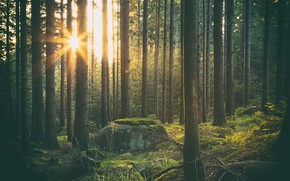 Picture The sun, Forest, Shine