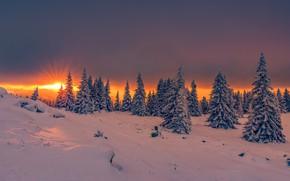 Picture winter, the sun, rays, snow, trees, landscape, sunset, nature, mountain, ate, Bulgaria, Vitosha, Edie Adams