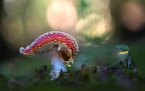 Picture macro, nature, mushroom, Rostock, moss, mushroom, bokeh