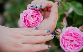 Picture nature, hand, spring, tea rose, roses