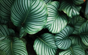 Picture leaves, line, background, plants, stripes
