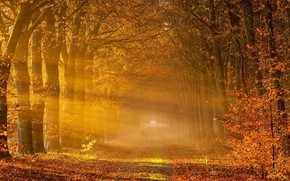 Picture autumn, fog, leaf