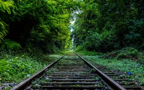 Picture ROAD, FOREST, GREENS, TREES, RAILS, SLEEPERS