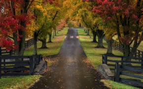 Picture road, autumn, trees, the fence, alley, Kentucky