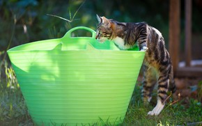 Picture cat, pose, kitty, basket, the game, garden, Taz