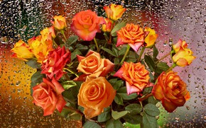 Picture drops, rain, roses, Autumn bouquet