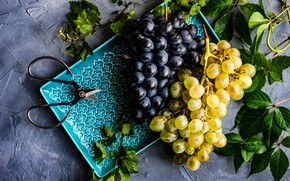 Picture plate, grapes, bunches