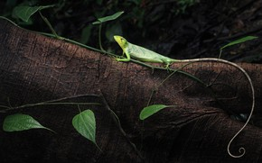 Picture leaves, tree, lizard, tail, log, green
