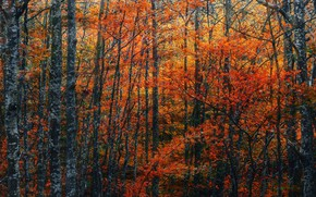 Picture autumn, forest, leaves, trees, branches, nature, thickets, foliage, the colors of autumn, autumn leaves