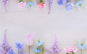 Picture greens, flowers, background, pink, blue