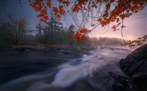 Picture autumn, forest, branches, river, Canada, Ontario