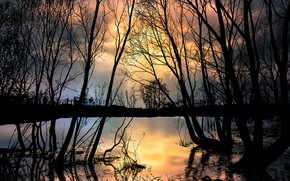Picture sunset, lake, silhouette of trees
