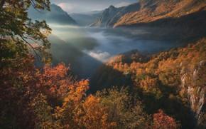 Picture autumn, forest, mountains, gorge, Montenegro, Montenegro, Tara River Canyon, Durmitor National Park, Национальный парк Дурмитор, …