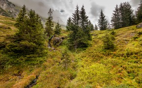 Picture forest, mountains, vegetation, ate, slope, hill