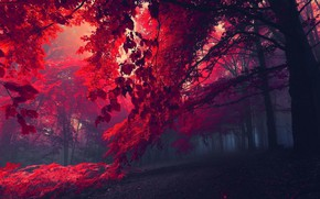 Picture Red, Nature, Forest