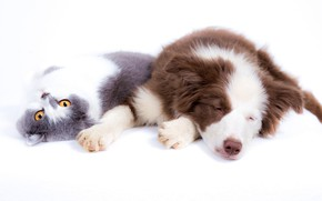 Picture cat, cat, stay, dog, white background, friends