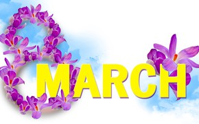 Picture crocuses, white background, March 8, women's day