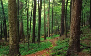 Picture Nature, Path, Trees, Forest, Fern