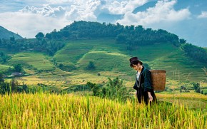 Picture field, clouds, mountains, hills, woman, Asia, Asian, rice fields