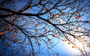 Picture rendering, branch, blue background, the last leaves, cloudless sky, the evening sun, lace autumn, autumn …
