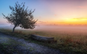 Picture road, sunset, fog