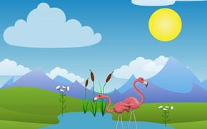 Picture summer, the sun, Flamingo