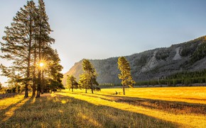 Picture field, autumn, light, mountains, tree, morning