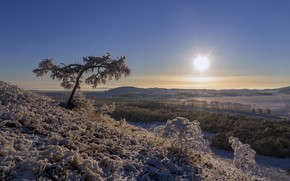 Picture winter, frost, forest, the sky, the sun, light, snow, landscape, branches, nature, tree, hills, height, …