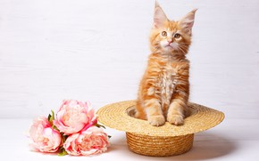 Picture flowers, hat, kitty