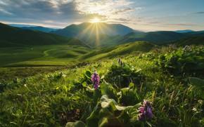 Picture the sun, rays, landscape, mountains, nature, dawn, hills, morning, canyon, gorge, meadows, Kyrgyzstan, Kyrgyzstan, Rev …