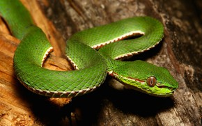 Picture nature, snake, green