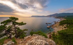 Picture sea, trees, coast, pine, Russia, Crimea, The black sea, The Natural Boundary Ajazma Neither