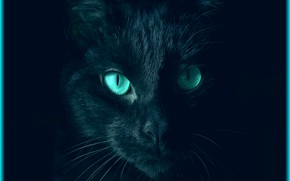 Picture cat, eyes, look, color