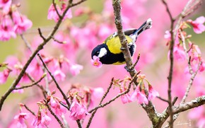 Picture tree, bird, spring, tit