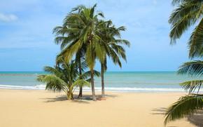 Picture sand, sea, beach, summer, the sky, the sun, palm trees, shore, summer, beach, sea, seascape, …