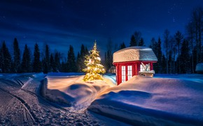Picture winter, road, forest, snow, trees, landscape, night, nature, lights, lighting, tree, light bulb, Finland, Lapland, …