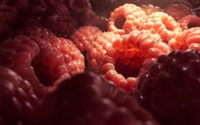 Picture Raspberries, Food, Berry, Raspberry, Raspberry, Rendering, Rendering, Tomas Kral, Food, Berry, by Tomas Kral