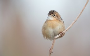 Picture branch, bird, baby