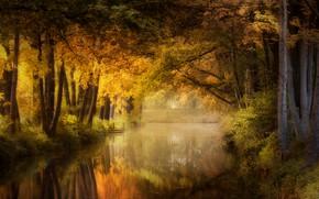 Picture autumn, forest, light, pond, Park, reflection, foliage, channel, pond, Bank, Golden autumn