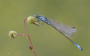 Picture dragonfly, morning, insect, a blade of grass