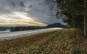 Picture winter, field, forest