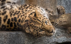 Picture baby, leopard, beautiful
