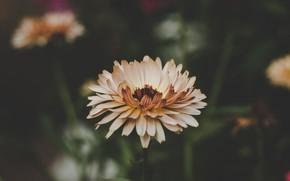 Picture Flower, Plant, Plants, Flower, Flowers, Color, Flora, Plants, Close-up, Blooming, Bloom, Flora, Plant, by Daniel …