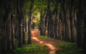 Picture trees, landscape, nature, alley, path, Krasnodar, Paul Sahaidak