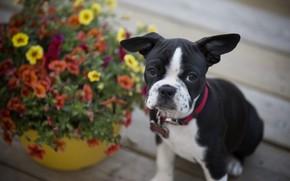 Wallpaper flowers, dog, puppy