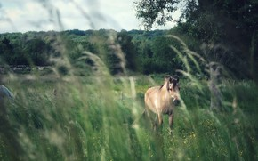Picture field, forest, grass, look, face, nature, horse, horse, pasture