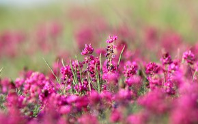 Picture flowers, the steppe, background, color