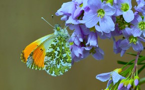 Picture flowers, background, butterfly, wings, Dawn, The core meadow