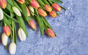 Picture flowers, bouquet, tulips, red, red, white, fresh, flowers, tulips, spring